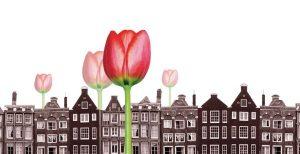 tulipomania tulipanes